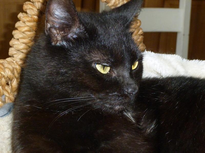 LUCY, adorable petite panthère noire de salon de 11 mois P1040224