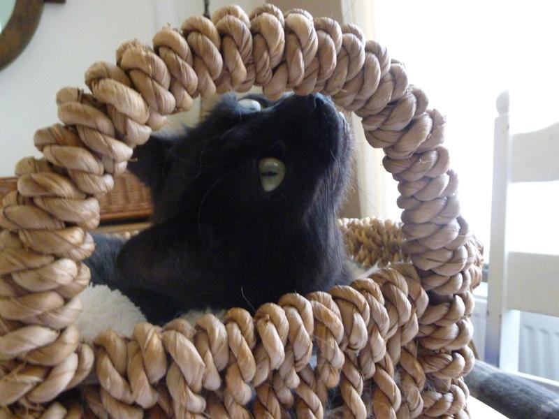 LUCY, adorable petite panthère noire de salon de 11 mois P1040225