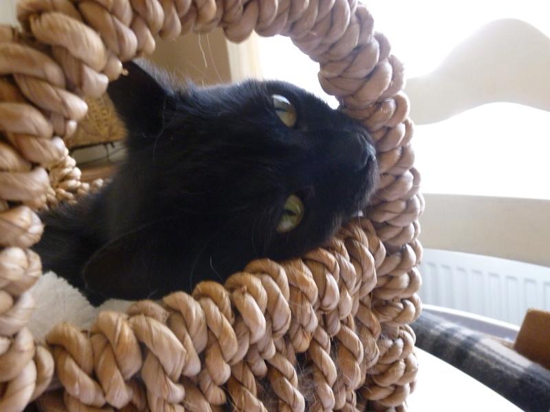 LUCY, adorable petite panthère noire de salon de 11 mois P1040226