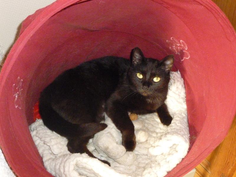 LUCY, adorable petite panthère noire de salon de 11 mois P1040227