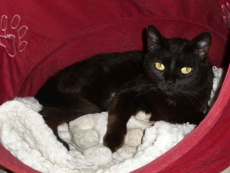 LUCY, adorable petite panthère noire de salon de 11 mois P1040228