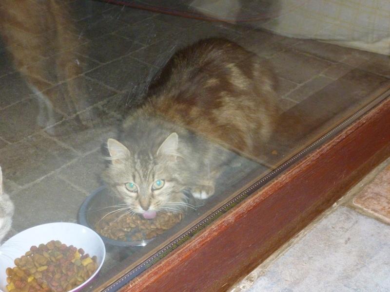 PEANUTS, belle petite chatte renversée par une voiture P1040231