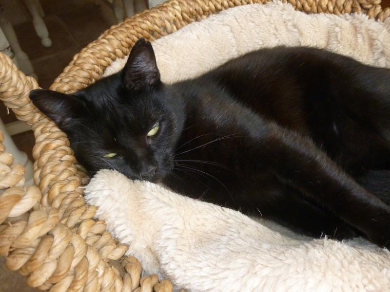 LUCY, adorable petite panthère noire de salon de 11 mois P1040421