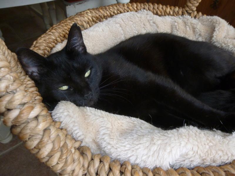 LUCY, adorable petite panthère noire de salon de 11 mois P1040422