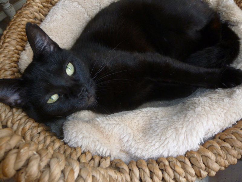 LUCY, adorable petite panthère noire de salon de 11 mois P1040423