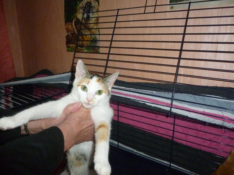 NINA ET NINO, adorables petits chatons de 4 mois P1040614