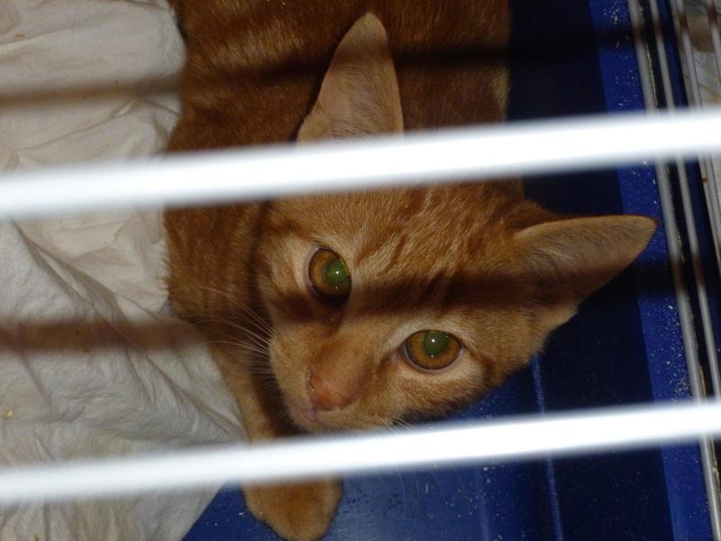DYLAN ET MATT, deux beaux chatons timides, cousins de Boule P1040618