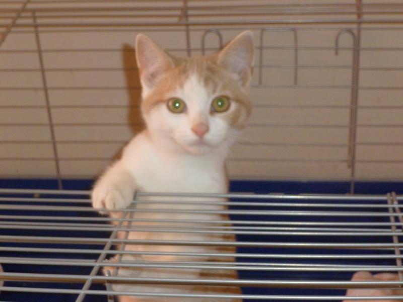 DYLAN ET MATT, deux beaux chatons timides, cousins de Boule P1040619