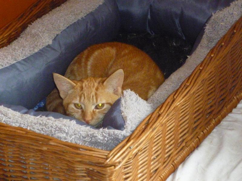 DYLAN ET MATT, deux beaux chatons timides, cousins de Boule P1040717