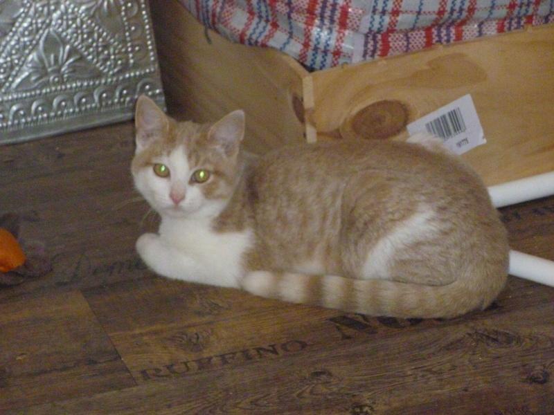 DYLAN ET MATT, deux beaux chatons timides, cousins de Boule P1040718