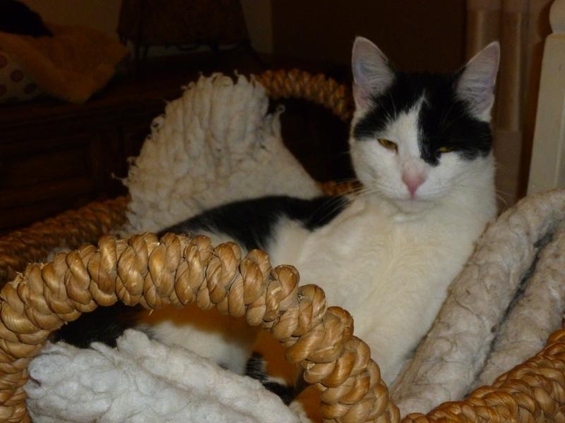 MACHA, très belle chatte junior de 8 mois, noire et blanche - Page 3 P1040723