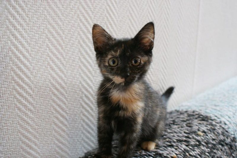 Stella, adorable petite écaille de tortue de 3 mois.  Stella12
