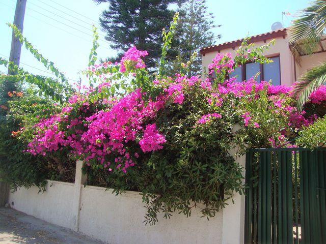 Mes vacances de l'été 2017 en Crète 3_vill11