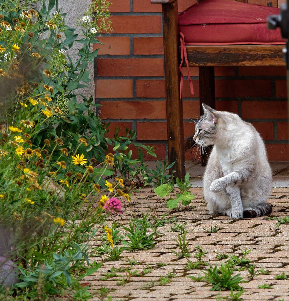 Un beau chat chez les voisins P6292810