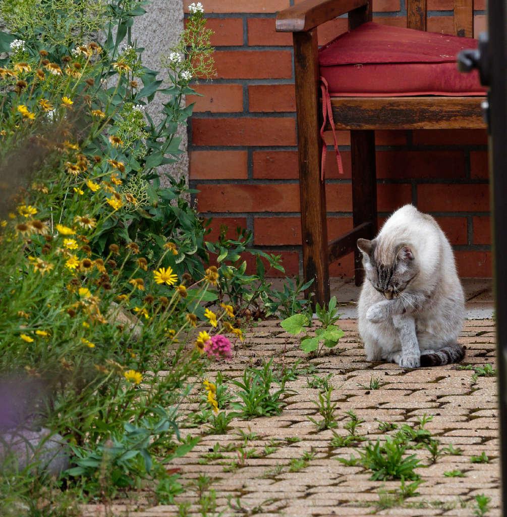 Un beau chat chez les voisins P6292811