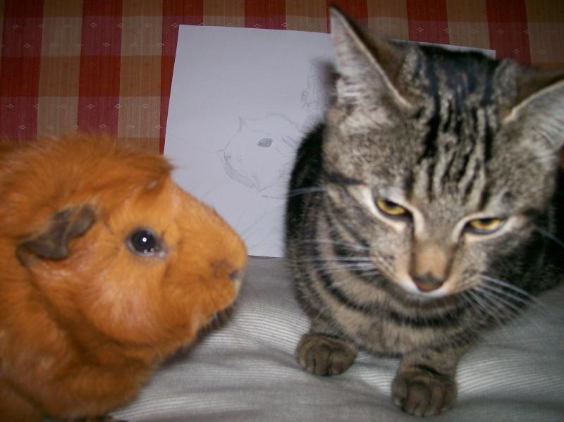 Mes chats: Maya, Léo et Fimo - Page 2 00710