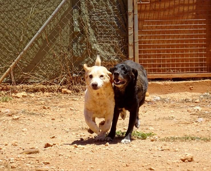 Mirinda und Pepe von den Sonnenhunden  Pepe_u10