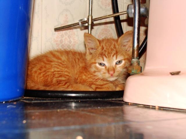 Abricot 3 mois et demi roux Dsc06419