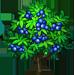 Vous cherchez un arbre ? Venez cliquer ici !!! Elderb10