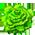 Alpaga Marron / Alpaga Blanc => Laine d'Alpaga Green_10