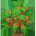 Vous cherchez un arbre ? Venez cliquer ici !!! Sallow15