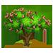 Acacia Drepanolobium => Fruit de l'Acacia Drepanolobium Whistl11