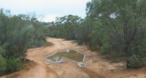 A swim anyone Aussie10
