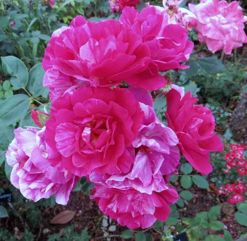 rosier Guy Savoie Guy_sa10