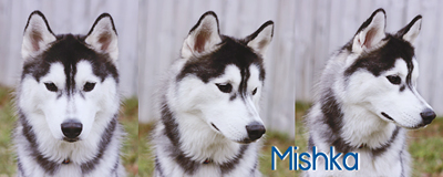 Mishka has cancer. Signat11