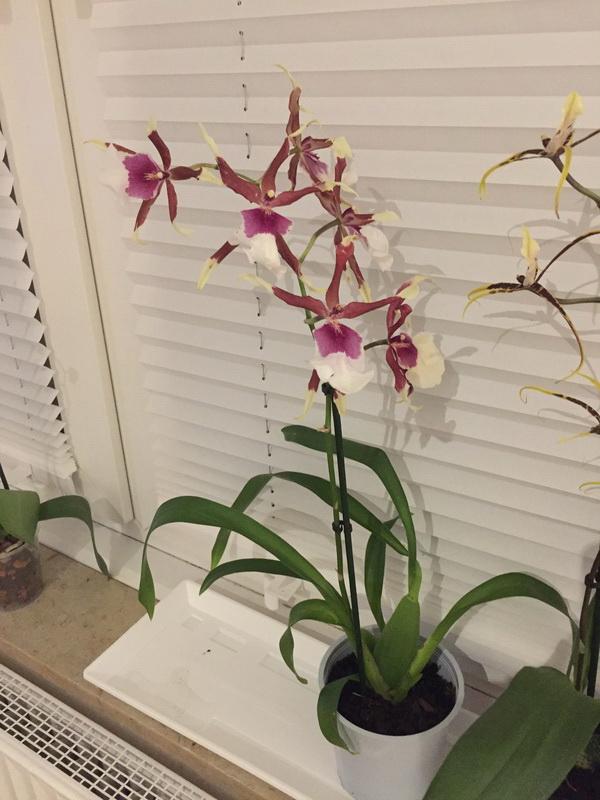 Wie heißen diese Orchideen? Img_3110