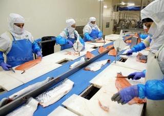 شركة DJYSTENE SUD : توظيف 20 منصب معالجة و تصبير منتوجات الاسماك بدون دبلوم و اجرة شهرية ابتدءا من 3000 درهم  Djyste10