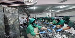 مجموعة الكینغ بیلاجیك KING PELAGIQUE لتصنیع و تثمین منتوجات الصید البحري السردین توظيف 50 عامل على الالات باكادير و 60 عامل انتاج بالجديدة و الرحامنة Kingpe10