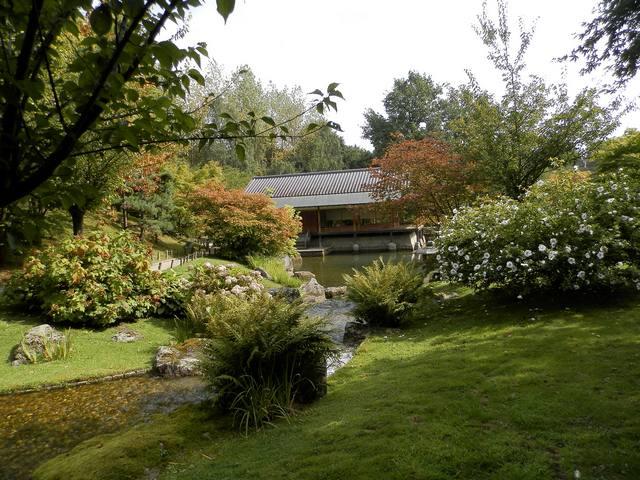 Visite Jardin japonais à Hasselt (limbourg belge) Japon310