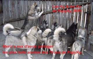 Au revoir. Husky_19