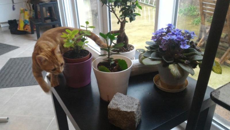 jardinage Thumbn10