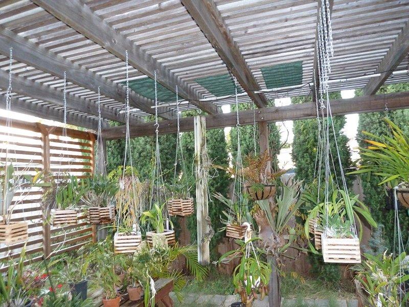 amenagement futur pour mes plantes pendant la belle saison House010