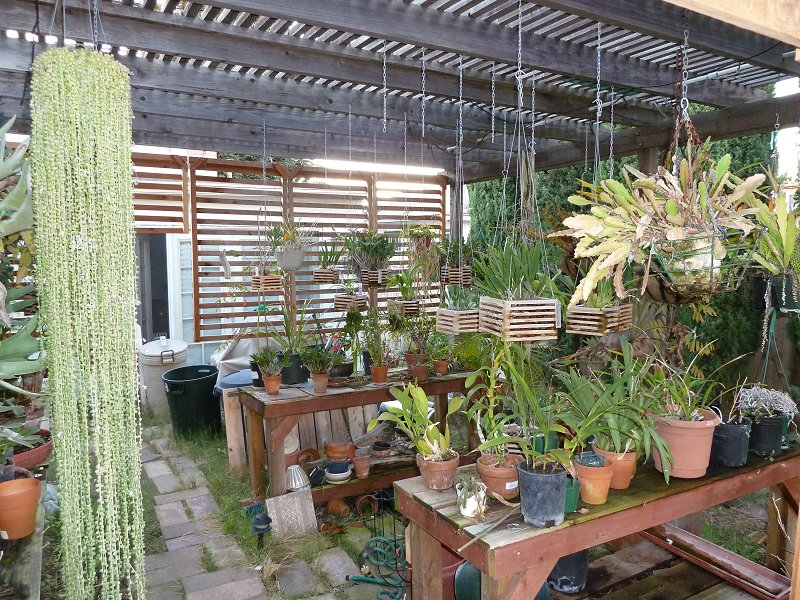 amenagement futur pour mes plantes pendant la belle saison - Page 2 House011