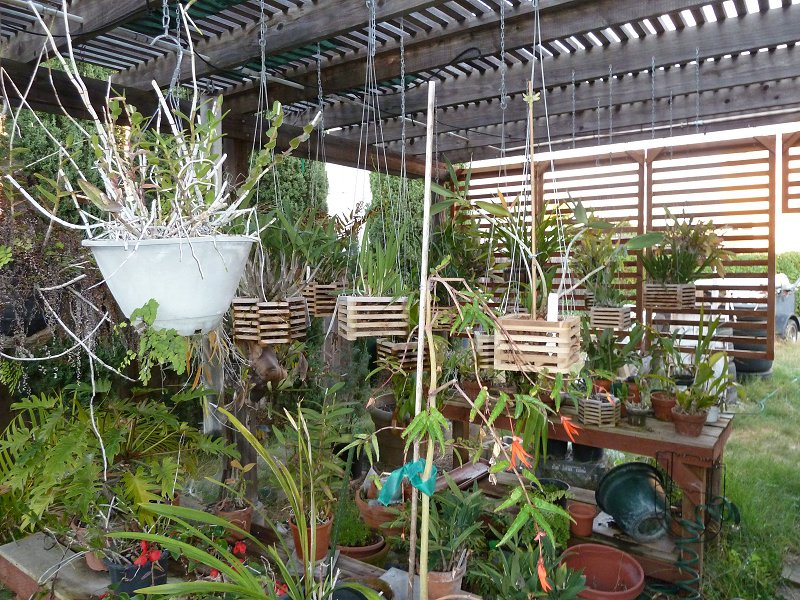 amenagement futur pour mes plantes pendant la belle saison House013