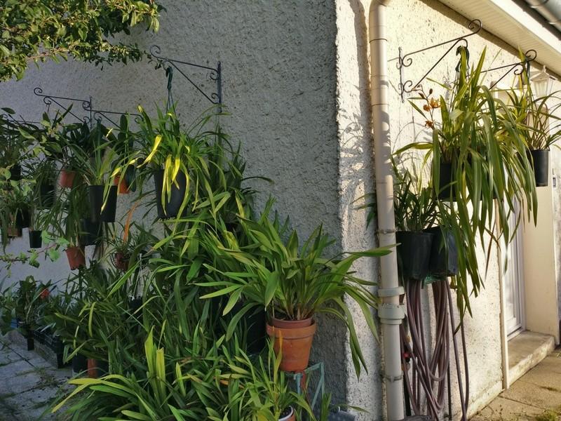 amenagement futur pour mes plantes pendant la belle saison Img_2065