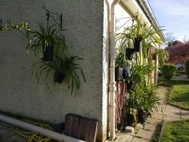 amenagement futur pour mes plantes pendant la belle saison Img_2066