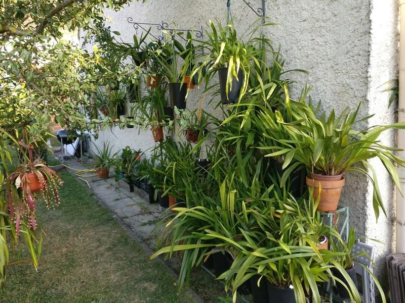 amenagement futur pour mes plantes pendant la belle saison - Page 2 Img_2068