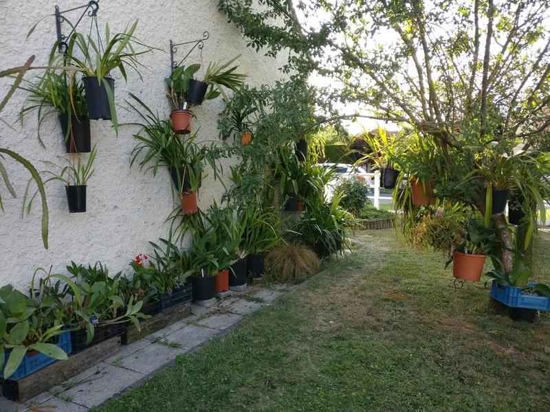amenagement futur pour mes plantes pendant la belle saison - Page 2 Img_2069