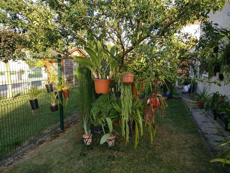 amenagement futur pour mes plantes pendant la belle saison - Page 2 Img_2070
