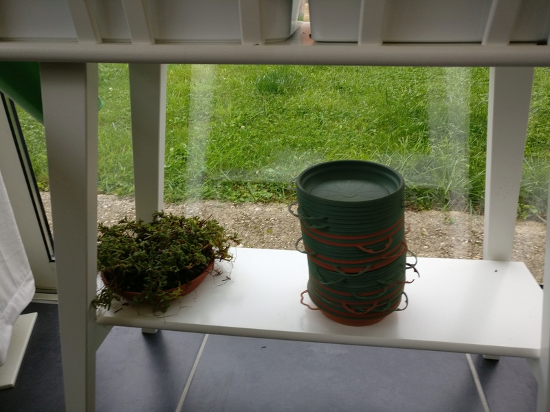 ma véranda, mon petit paradis végétal ... Img_2073