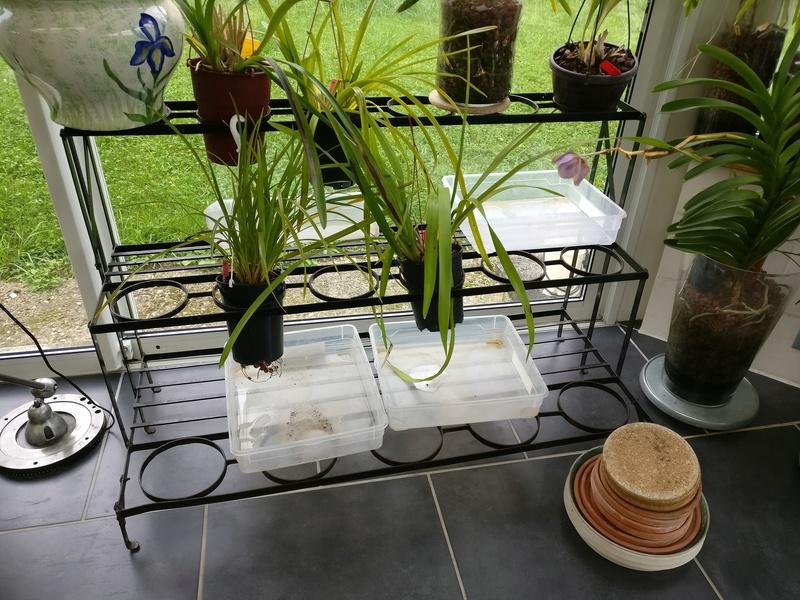 ma véranda, mon petit paradis végétal ... Img_2074