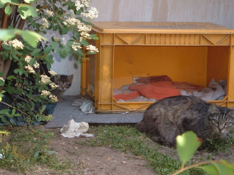 Créer un abri contre l'hiver pour les chats errants Dscf2510