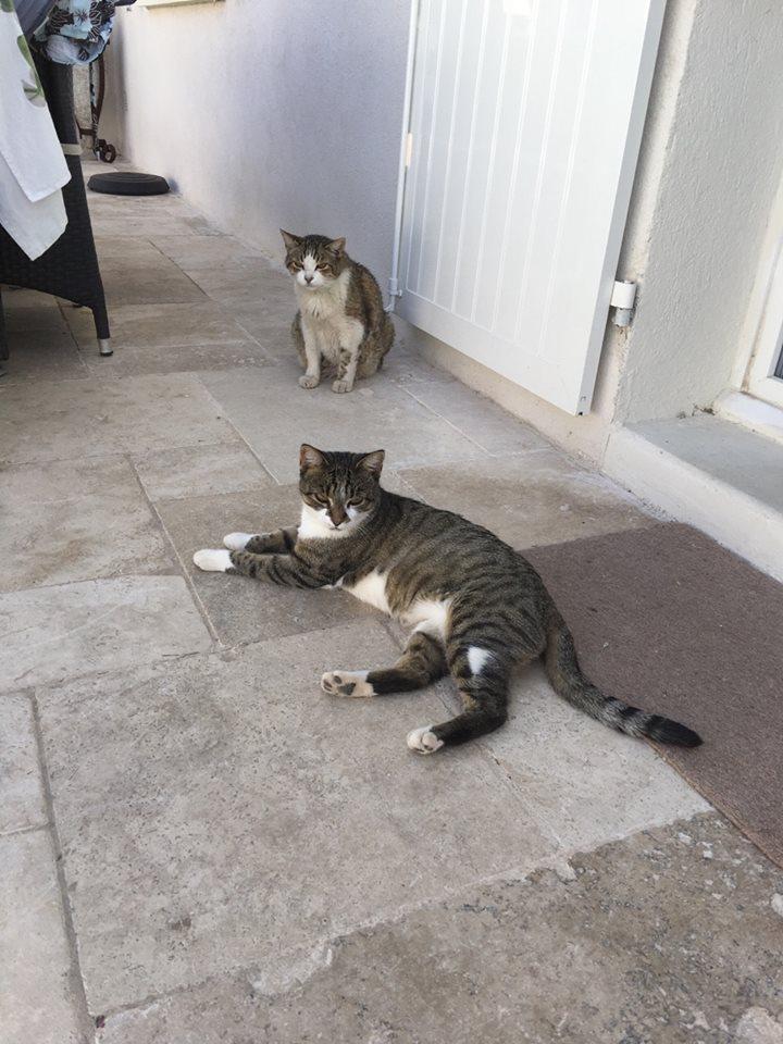 MINA - chat mâle très affectueux, estimé 10 ans - EN FA chez Christine (dpt 83) - DECEDE Mina_e10