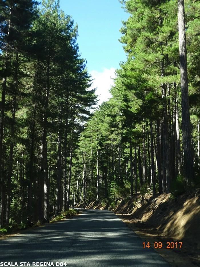 [Autres voyages/France] le tour de la Corse en voiture en 15 jours - Page 2 Dsc07423