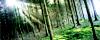 Forêt des Druides