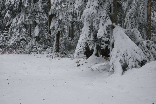 12/2012, dans la neige, forêt + urbain Dsc_0120